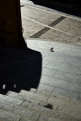 Pigeon au pied de la cathédrale de Metz